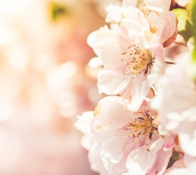 Wonderful Spring Blooms BY VIKTOR HANACEK via picjumbo.com